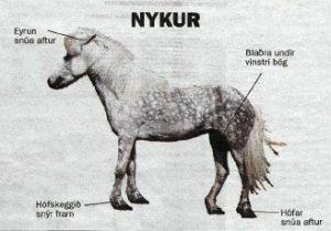 nykur